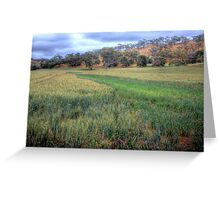 The Grain Of Life - Mine Road, Kanmantoo, The Adelaide Hills Greeting Card