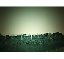 the vines Photographic Print