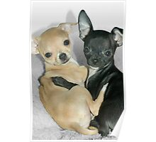 """Chummy Chihuahuas"" - Looks like Puppy Love Poster"