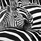 """""""Stripes"""" - Optical Illusion of the stripes on the zebras by ArtThatSmiles"""