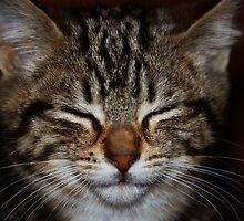 Xena...the barn warrior kitten! by Sue Ratcliffe