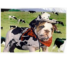 """Cow Dog"" - An English Bulldog wants to be a Cow Dog. Poster"