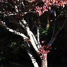 Just A Tree by Rozalia Toth