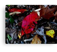 Leaves in the Fall Canvas Print