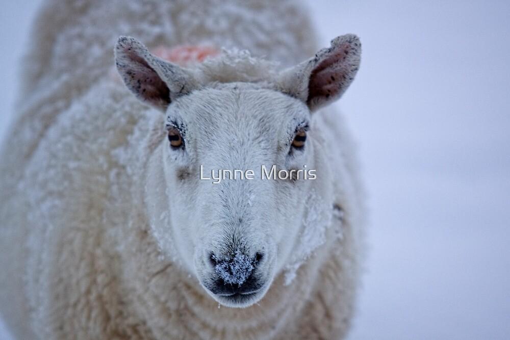 What Ewe Lookin' At by Lynne Morris