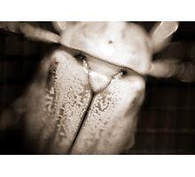 Christmas Beetle Photographic Print