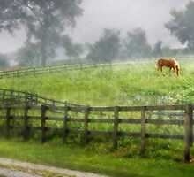 Horse in the Rain by Nadya Johnson