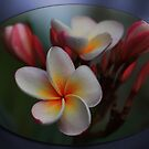 Frangipani Cluster by Keith G. Hawley