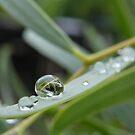Raindrop by binjy