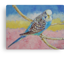 Sky Blue Budgie Canvas Print