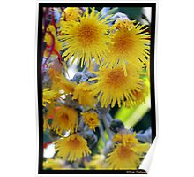 Weeping flowers Poster