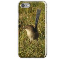Superb Fairy Wren (Young Male) iPhone Case/Skin