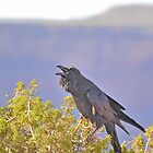 Death Valley - Ravens World by Chuck Harlins