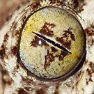 Leaf Tailed Gecko  by Steve Bullock