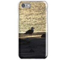Pacific Gull at Sunset iPhone Case/Skin