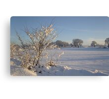 Winter Scene Dalmeny Canvas Print