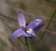 Wax Lip Orchid by Justine Armstrong