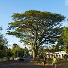 When nature makes you feel small - Tonga by Ainslie Keele