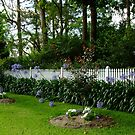 A Picket Fence with Agapanthus (Lily of the Nile)! by Gabrielle  Lees