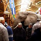 The Trinity Elephant (The Pannier Market - Barnstaple) by Simon Groves