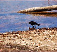 Starling in the Stillness: by Cherubtree