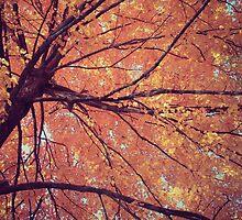 Autumn by Hilary Walker