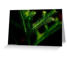 sliced leaves Greeting Card