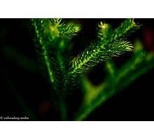 sliced leaves Photographic Print