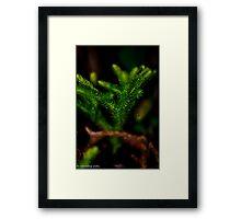 sliced leaves Framed Print