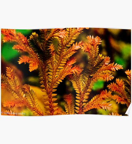 colorful miniture leaves Poster