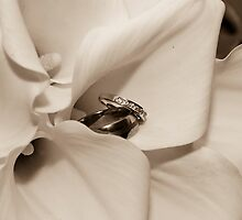 The Fine Details 3 by Kelly Connolly