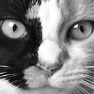"""""""Calico Eyes"""" - Ying and Yang Cat by ArtThatSmiles"""