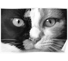 """Calico Eyes"" - Ying and Yang Cat Poster"