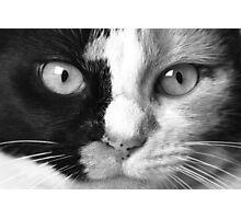 """Calico Eyes"" - Ying and Yang Cat Photographic Print"