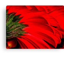 Gerbera Abstract Canvas Print