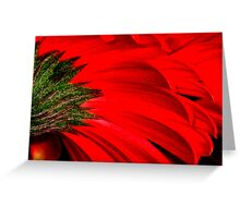 Gerbera Abstract Greeting Card