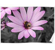 Bumble bee flower  Poster