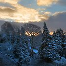 sunrise over snowy trees by Dave Milnes