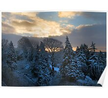 sunrise over snowy trees Poster