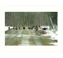 The First Winter Turkey Races in Maine Art Print