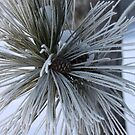 Flocked Pine Needles by swaby