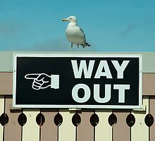 Way Out  by Rob Hawkins