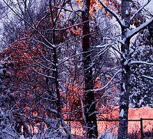 Winterland by homesick