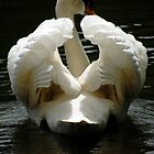 Inside the Swan by Shienna