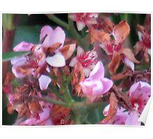 Macro of roadside wild flora Poster