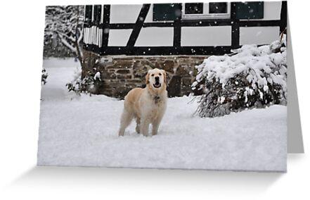 Please, let it snow! by astrolabio