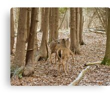Encounter in the woods Canvas Print