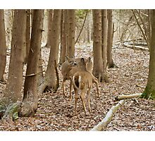 Encounter in the woods Photographic Print