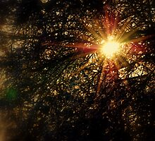 Winter Sun Through Tree's by Stan Owen