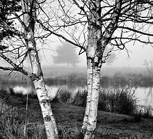 Late November Birches by RIDGEWORKS